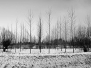 Inverno sul Tergola